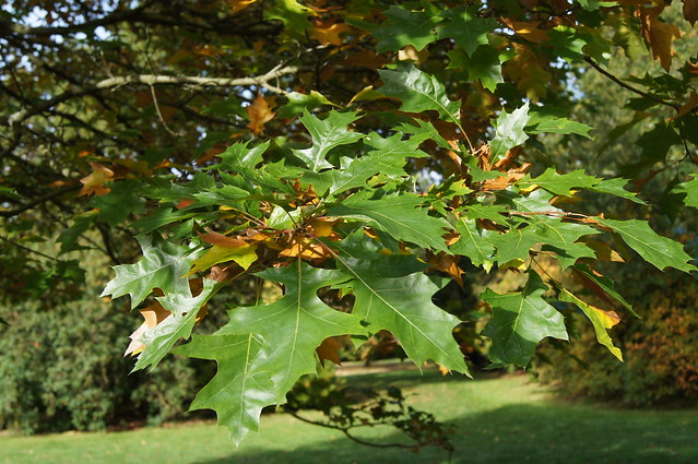 Leaves at Stourhead