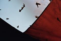 birds (Alexandra Badea) Tags: autumn abstract color birds analog 50mm minolta kodak 200 material t200 rokkor bunesti