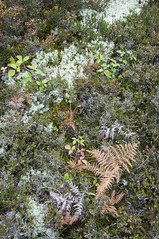 Landscape texture (Keartona) Tags: colour detail texture nature wales landscape moss october natural heather bracken snowdonia
