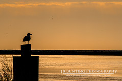 Fall Morning. (JB Bunting Photography) Tags: beach harbor morninglight rainbow fishing maryland beachlife easternshore oceancity smalltown coastaltown fishingtown coastalliving worcestercounty