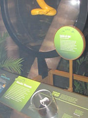 AMNH Poison pit viper display (Exhibit Dev) Tags: exhibit poison amnh