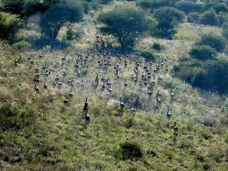 Namibia Safari - Lake Lodge 27