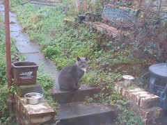 old smokey (squeezemonkey) Tags: southwales yard cat garden bench path steps kidwelly