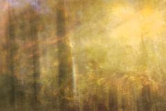 DSC_0700 (AC Fisher) Tags: longexposure autumn trees sunlight lightpainting abstract fall forest experimental surreal cameratoss icm lightplay intentionalcameramovement