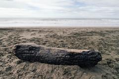 beach wood (rafael-castillo) Tags: ocean sanfrancisco wood beach photography log nikon san francisco photographer 28mm pacificocean oceanbeach firewood frisco freelance beachwood fogcity d600 28mm18 nikond600 freelace 28mm18g
