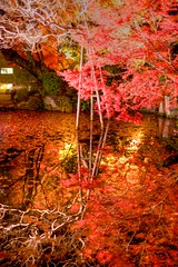 IMG_5298 (Thomo13) Tags: autumn trees red colour fall leaves japan canon eos gold kyoto mark ii 5d momoji