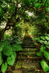 Stairway to Nature (RandomIbis2k12) Tags: nature landscape nikon stairway tokina hdr d7100 1116mm