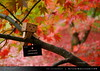 danbo_118 (iskandarbaik) Tags: park uk autumn trees england tree cute home forest toy photography leaf woods bokeh outdoor manga cardboard autumnal yotsuba danbo danbooru revoltech danboard cardbo danboru