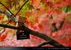 danbo_118 (iskandarbaik) Tags: park uk autumn trees england tree cute home forest toy photography leaf woods bokeh outdoor manga cardboard autumnal yotsuba danbo danbooru revoltech danboard cardbo danboru