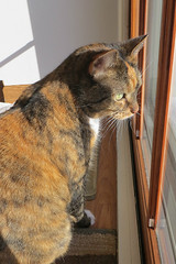 Gracie 21 January 2014 9410Ri 4x6 (edgarandron - Busy!) Tags: cats cute cat gracie feline tabby kitty kitties tabbies patchedtabby