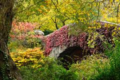 Central Park, New York (Wing Tam Photography) Tags: newyorkcity autumn tree fallcolor centralpark manhattan fallfoliage