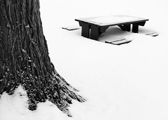 Table & Tree (Sandra A.-B.) Tags: park winter bw snow tree monochrome table picnic