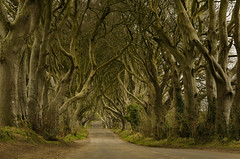 The Dark Hedges. (Patrick Higgins Photography) Tags: antrim coast landscape ireland dark hedges trees game thrones