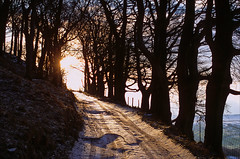 the light at the end of the lane (Ron Layters) Tags: lane trees sun snow tracks lanetobankhall winter cold bankhall chapelenlefrith drystonewall highpeak peakdistrict england derbyshire unitedkingdom pentax mz10 pentaxmz10 slidefilmthenscanned slide transparency fujichrome provia ronlayters