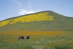 Wildflower picnic -Explore (Patrick Dirlam) Tags: trips carrizoplain picnic wildflowers explore explored