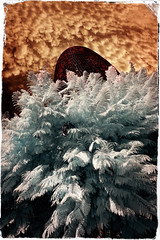 Agbar i les fases del cicle hidrològic. Fase #4: Infiltració (Ar@lee) Tags: barcelona catalunya green airelibre torreagbar jeannouvel clot bordeparafotos construcción d50 espectrecomplet exteriors barcelonaexperience fullspectrum filtre720nm fotografíainfrarroja photographyinfrared ir nikond50 paisajeurbano arquitectura red clouds yellow sky tree blue