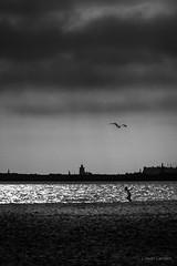 Libres (AvideCai) Tags: avidecai playa bn blancoynegro agua mar nubes cielo vertical