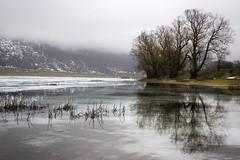 Riflessi ghiacciati (SDB79) Tags: matese lago ghiaccio neve campania monti freddo inverno albero riflesso natura paesaggio