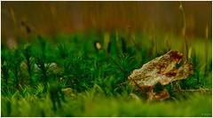 (Fernando Vaz das Neves) Tags: nature natureza cores coresdeoutono colors canon canonphoto canonphotography belgique belgium belgica bélgica herbeumont folhas folha leaf ilovephotography