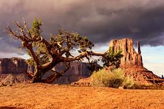 Monument to Nature (garshna) Tags: monumentvalley westmitten sentinelbutte landscape tree juniper sky clouds