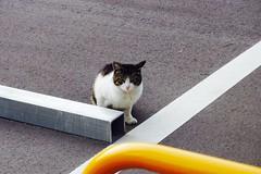 Today's Cat@2017-03-13 (masatsu) Tags: cat thebiggestgroupwithonlycats catspotting pentax mx1