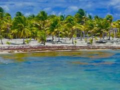 Version 2 (bermudafan8) Tags: 2017 spring break bermudafan8 mexico snorkel caribbean water ocean blue