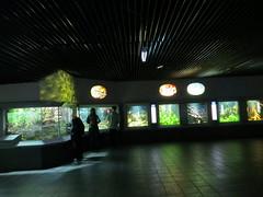 00734930 Aquarium Berlin 1 - 2017 (golli43) Tags: aquariumberlin zoo fische krokodile quallen wasser wasserpflanzen amphibien insekten unterwasserwelt