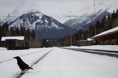 The Hitcher (chrisroach) Tags: banffnationalpark crow railroadtrack banff mountains countries railway alberta canada snow leadinglines mountain winter hitcher canada150