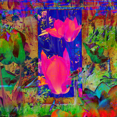 Pink Tulip Gate (Lemon~art) Tags: pink tulip gate flowers spring blue bright abstract painted manipulation