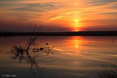 Abendrot - 26031701 (Klaus Kehrls) Tags: sonnenuntergang spiegelung natur landschaft himmelmoor quickborn schleswigholstein seen gewässer