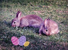 Busy Easter Bunnies (pianocats16, miau...) Tags: bunny rabbits easter eggs cute babies