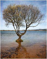 Kenfig Pool (tina777) Tags: kenfig pool nature reserve tree water lagoon dunes south wales topaz adjust