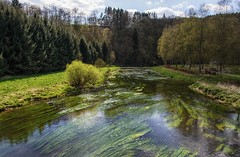 River Semois in Mortehan (Eric@focus) Tags: smwès semois weed plants