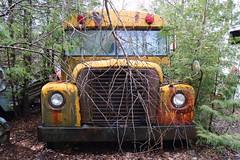 IMG_2657 (Irina Souiki) Tags: rusty crusty cars mcleansautowreckers milton ontario old oldcars