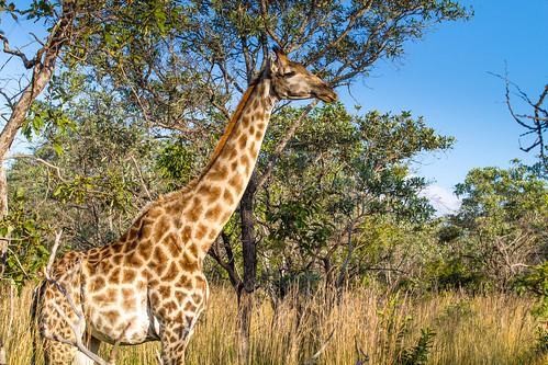 KrugerParkREIZ&HIGHRES-96