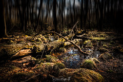 Decay (Simmie | Reagor - Simmulated.com) Tags: 2017 april connecticut connecticutphotographer easthampton forest hurdstatepark landscape landscapephotography nature naturephotography outdoors park seascape spring unitedstates woods digital https500pxcomsreagor httpswwwinstagramcomsimmulated wwwsimmulatedcom