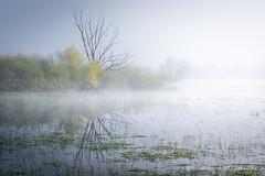 Prendre la lumière (Bertrand Thiéfaine) Tags: ancenis brume printemps marais maraisdegrée arbre herbe foulque lumière nikon d750 eau prairieinondée