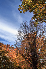 untitled (Pandora_8800) Tags: landscapes outdoor tree trees atumn fall leaves