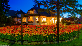 Oak Bay Tulip House