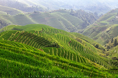 Longji Terrace (©Helminadia Ranford) Tags: longji rice field terace nature travel guilin guangxi china