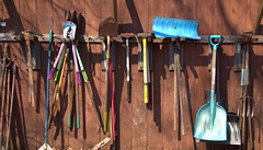 Tool Rack (chantsign) Tags: toolrack outdoors shovel colorful prunningshears hammers pitchfork handles worn rusted shadows