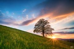 The tree (Thomas Bacher - Fotografien) Tags: tree sunset sonnenuntergang switzerland swiss bülach spring frühling abendstimmung evening grün green warme fraben warm colors kraft force strength place