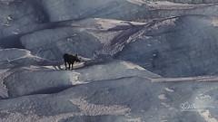 Moose_64A2299 (Ed Boudreau) Tags: alaska alaskalandscape alaskamountains chugachmountains glacier landscape landscapephotography winter winterscape winterscene