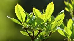 France 2017 - Sautron (philippebeenne) Tags: france nantes fleurs flowers nature jardin green spring printemps garden flower flor light colour