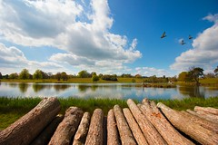 Lake logs (Ollie Barr) Tags: ducks lake logs log water nature natural wideangle wide angle 1018mm canon 550d eos digital camera dslr sky clouds