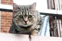Cute cat (katjacarmel) Tags: cat animal pet cute portrait gato chat dier kat poes eyes spring huisdier animales katze tier