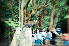 Acción (Angela MGM) Tags: parquenacionaliguazú brasil argentina iguazú naturaleza landscape paisaje agua cascada viaje lugares travel natural
