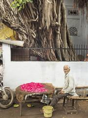 1/2 Flower seller  Vendeur de fleurs  ....Gwalior --India (geolis06) Tags: geoli06 asie asia inde india madhyapradesh voyage travel gwalior gwaliorfortress gwlaliorstreet ruedegwalior flowerseller vendeurdefleurs streetseller olympusem5 olympusm1250mmf3563 street seller rue vendeur