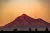 Mt Taranaki sunset. (bob_katt) Tags: taranaki mountains sunset cows sky silhouette dusk landscape natural wonders northisland newzealand canon eos500d opunaki tree snow