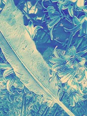 Abstract Denim (instamatiic.3nigma) Tags: photoedit photolab filter denim flowers nature feather